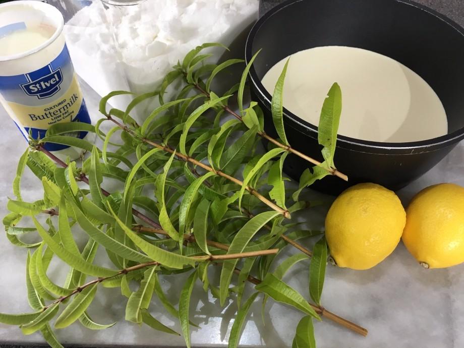 Lemon Verbena Panna Cotta